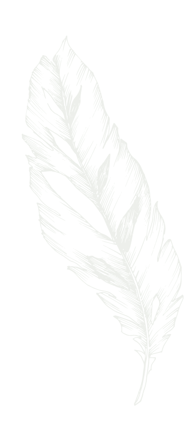 Light Gray Feather
