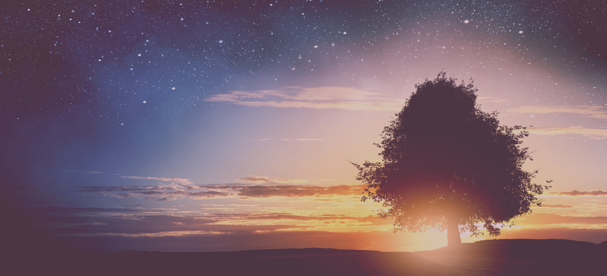 Starry Sky and Tree Silhouette